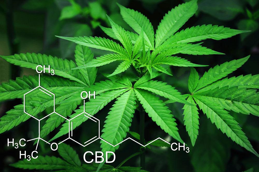 CBD chemical composition