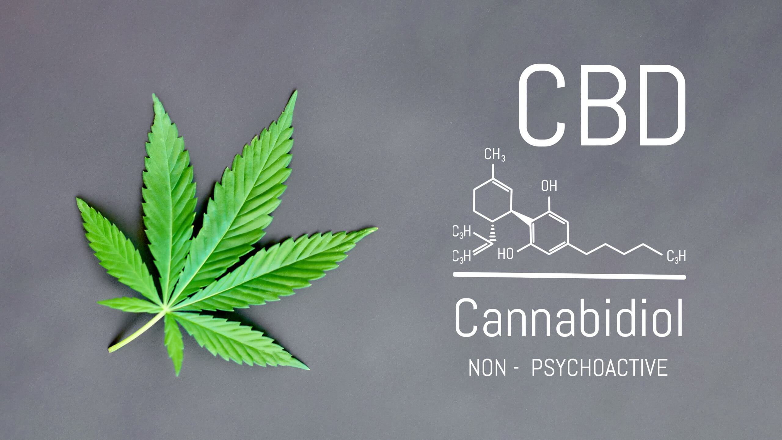 cannabis plant with the chemical molecule of CBD Canabidiol