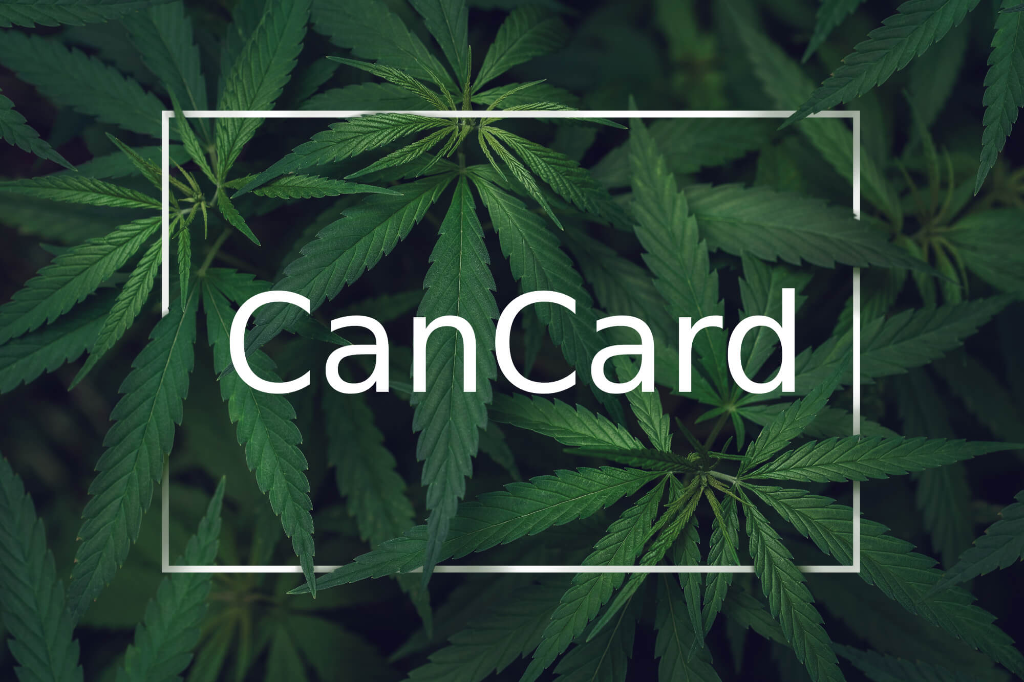 cannabis with a white frame and typo cancard in the middle